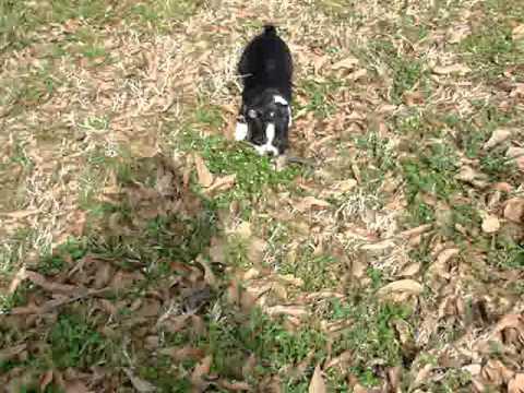 Jada enjoying some playtime outside!