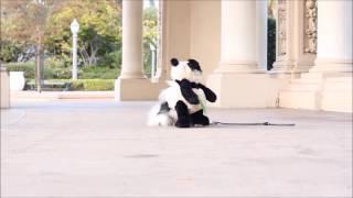 animale cainele panda
