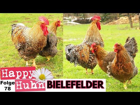 Perepelinyje die Eier das Rezept für die Erhöhung der Potenz