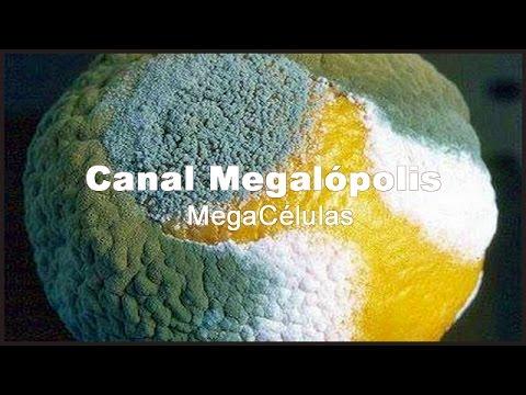 El alcohol la glicerina el vinagre para el tratamiento del hongo de las uñas