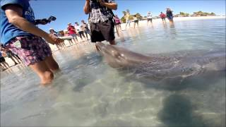 Delfinerne I Monkey Mia