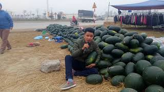 Suddenly the boy selling bolero melon made people listen to love - the music of Nguyen Vinh
