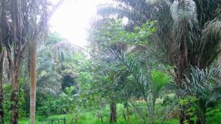 preview picture of video 'Mauritius Pamplemousses Garden - A Promenade In The Tropical Garden - 12/2009'