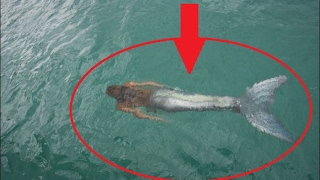 Kameralara Yakalanmış 5 Deniz Kızı Videosu !!