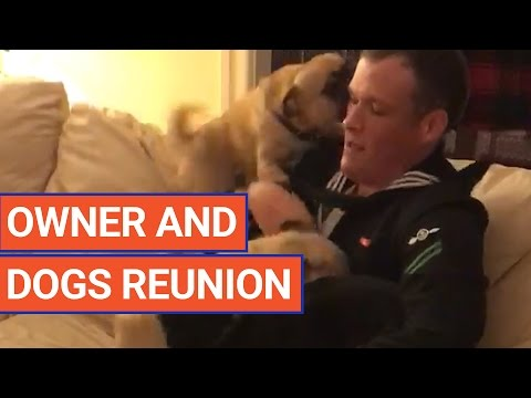 Amazing Dog Get Excited About Sailor's Homecoming Pet Video 2017   Daily Heart Beat