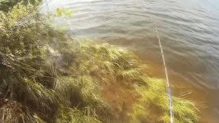 Клев рыбы в ярцево смоленской области
