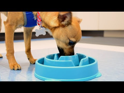 Outward Hound Fun Feeder Mini - Coral Orange Video