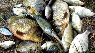 Готовим рыбу на рыбалке