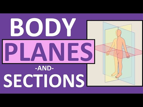 Download Body Planes and Sections: Frontal, Sagittal, Oblique, Transverse | Anatomy and Physiology Mp4 HD Video and MP3