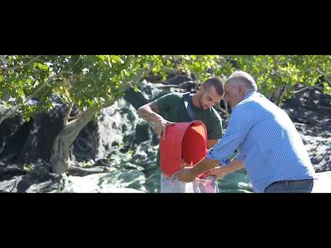 Dia colpi di martello lascia cadere la struttura di Torah