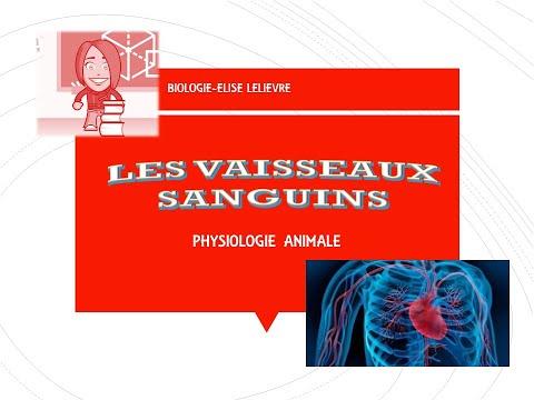 110-60 traitement de la pression artérielle