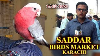 Exotic Birds At Saddar Sunday Market Karachi Rd 16-2-20 Updates Video (JAIC) In Urdu/Hindi