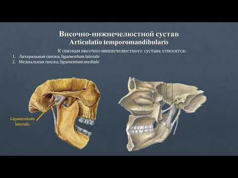 Анатомия височно-нижнечелюстного сустава: строение, классификация, фиксирующий аппарат, движения