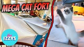 Lets Create the ULTIMATE CAT FORT!