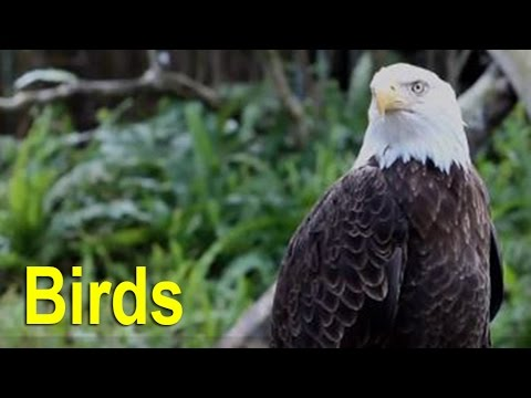 Most Endangered Species & Threatened Species: Birds on the Endangered Species List