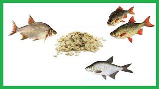 Геркулесовая каша для рыбалки как приготовить