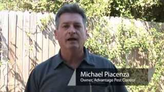 Pest Control   How to Kill Ant Piles in Your Lawn