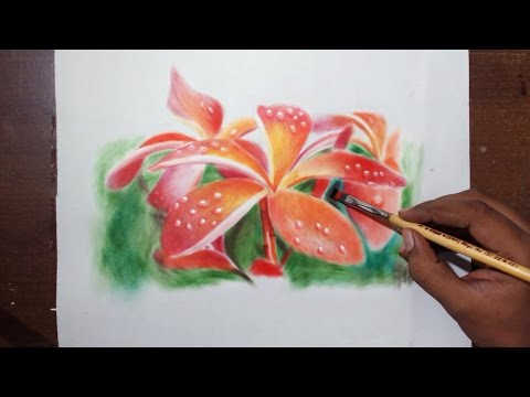 plumeria flower drawing tutorial by fadil