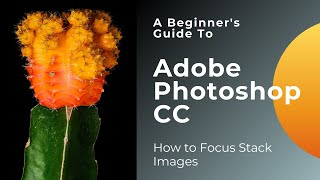 How to Focus Stack Images in Photoshop CC
