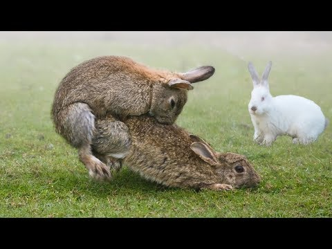 , title : 'These Are 10 Most Fascinating Facts About Rabbits'