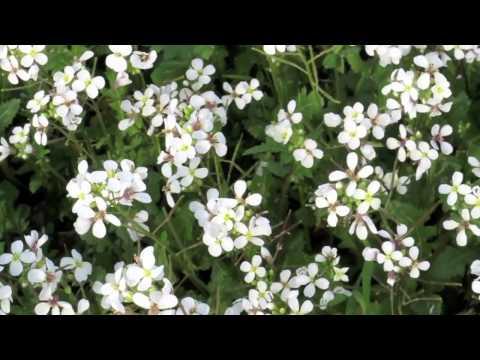 דבר אלי בפרחים - טיול בארץ ישראל!