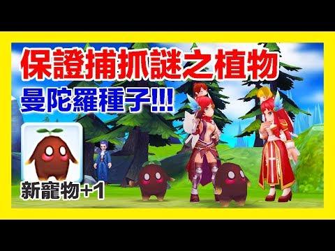 【RO仙境傳說】收服迷藏森林~曼陀羅種子!