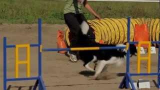 preview picture of video 'Agility e jumping - le seconde gare di Elrond.mp4'