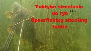Taktyka strzelania do ryb Spearfishing shooting tactic