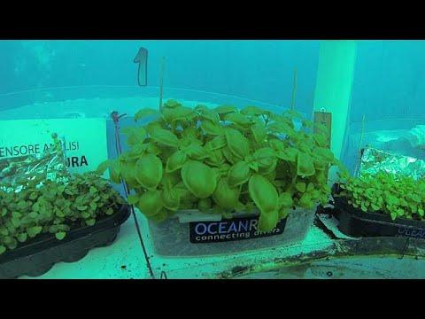 Ιταλία: Προχωρά η υποβρύχια καλλιέργια τροφίμων