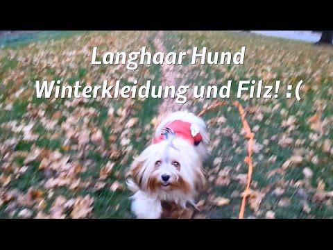 Langhaar Hund* Havaneser* Winterbekleidung und Filz!