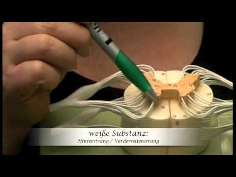 Die Erholung in krymu die Behandlung der Wirbelsäule