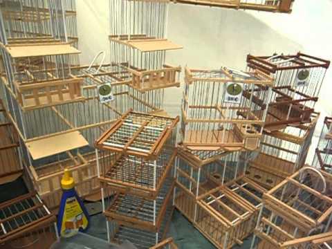 jaulas artesanales de madera para pajaros
