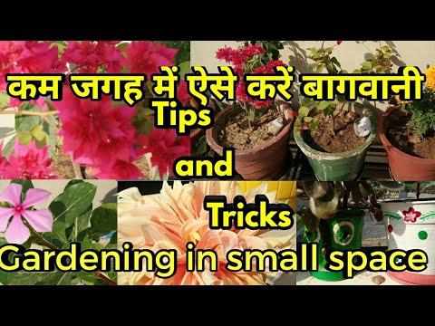 कम जगह में ऐसे करें बागवानी,Gardening in small space,tips and tricks,anvesha,s creativity