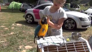 ara ararauna - papouščí den , Šumperk 2015