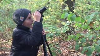 Cudowronki / Birds of paradise