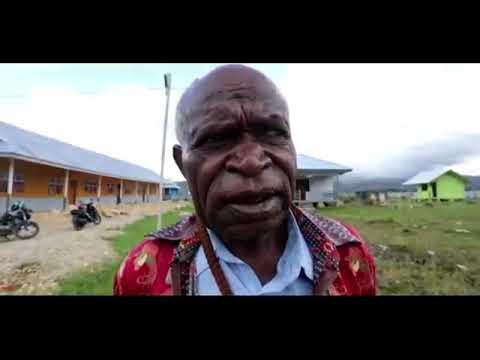 Binmas Noken Berikan Bibit Ternak Babi Di Kabupaten Paniai
