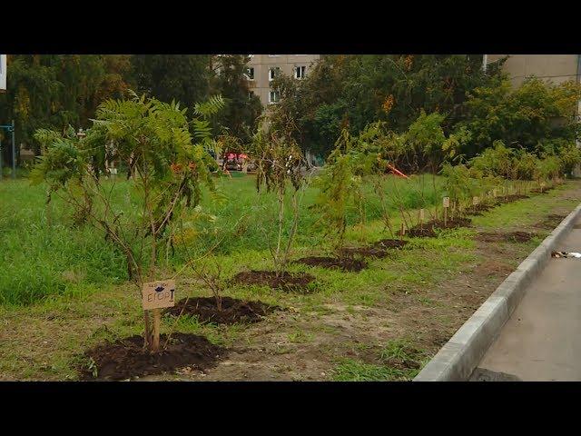 Ангарчане высаживают деревья