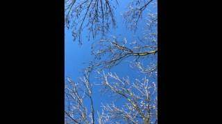 ABSTRACT ART VIDEO: TREE'S MOVING by J van Bavel