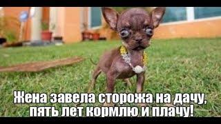 прикольное видео.ржака до слез от Вадо№7