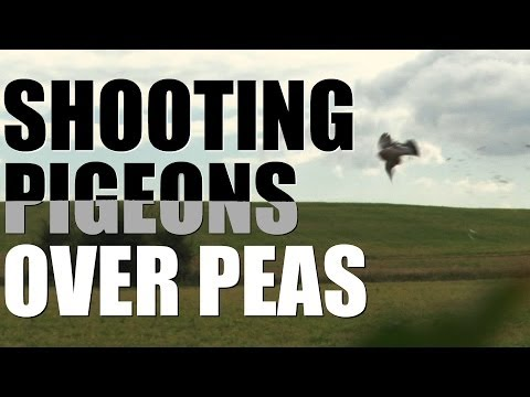 Pigeon & Peas – from field to fork