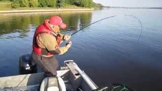 Рыбалка в подмосковье на сома