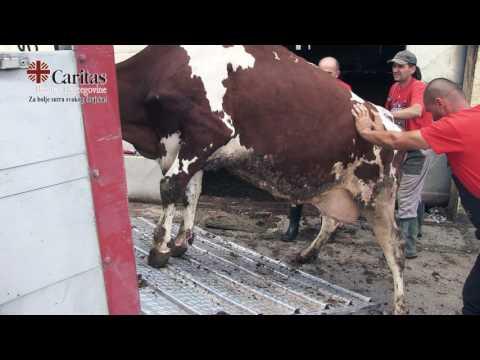 Evakuacija na farmi Livač