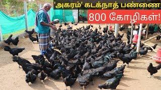 800 கோழிகளுடன் அகரம் கடக்நாத் பண்ணை