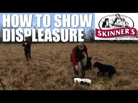 Gundog training tips – how to show displeasure