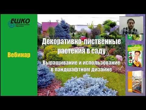 Декоративно-лиственные растения в саду. Выращивания и использования в ландшафтном дизайне.