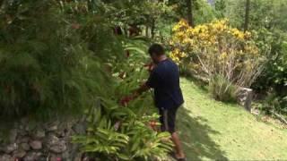 Location vacances en guadeloupe : Les Orchidées de SAinte-Anne. Sebastien fait la présentation