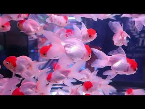 คลินิคปลาสวยงาม