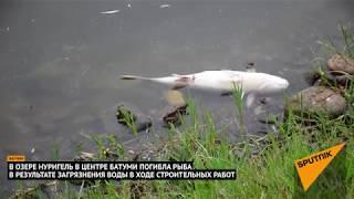 Экологическая катастрофа в Батуми: в местном озере погибла рыба