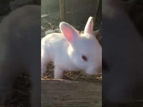 Крольчатки))