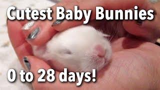 The Cutest Baby Bunnies - Newborn to 28 Days!